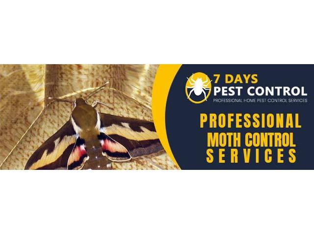 Moth Control Brisbane - 1