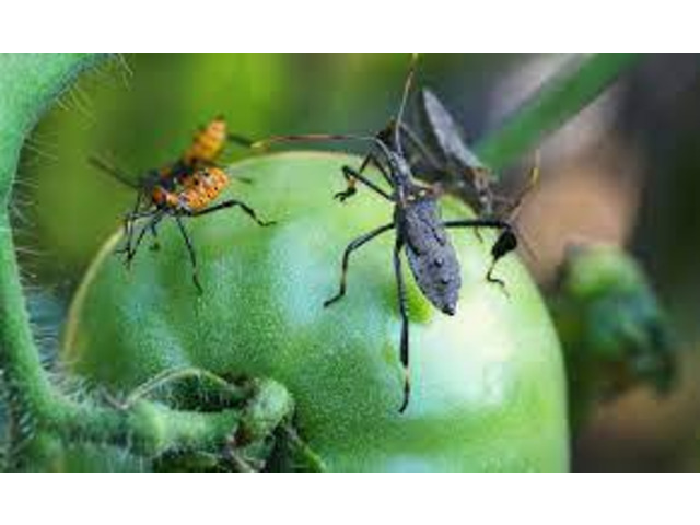 Local Pest Control Brisbane - 4