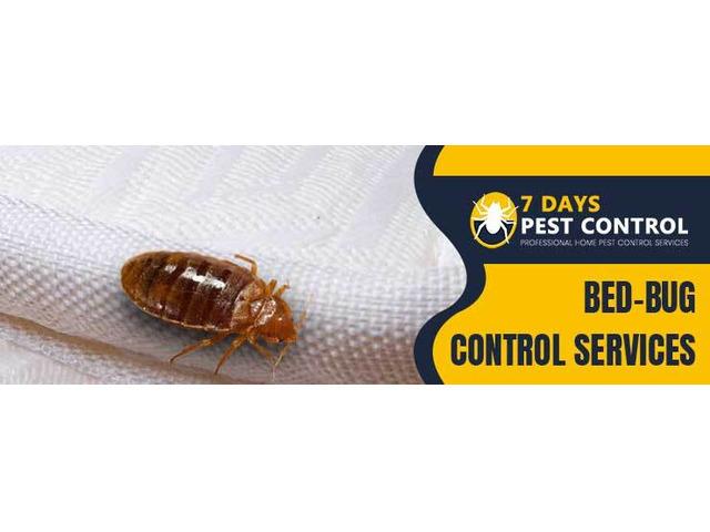 Bed Bug Control Brisbane - 1