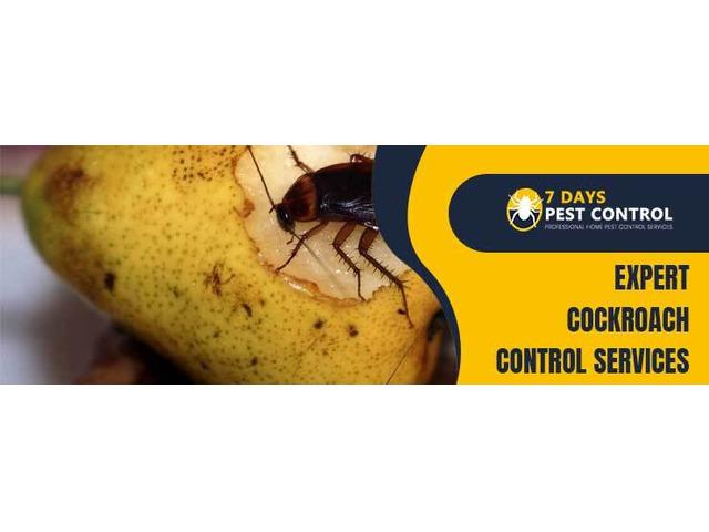 Cockroach Control Brisbane - 1