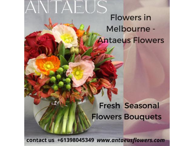 Best Flower in Melbourne - Online flower - 1