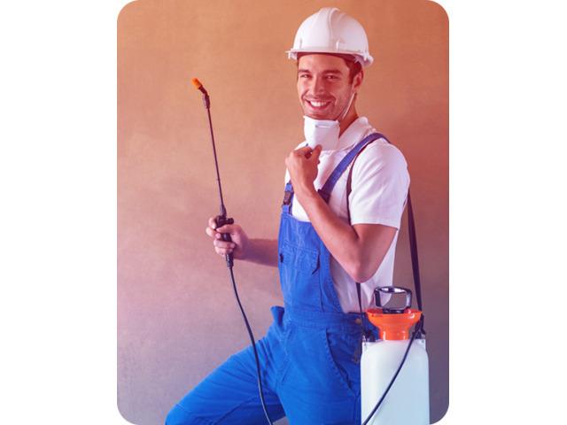 Pest Control Doctor - Borer Control Melbourne, Get same day pest control services in Melbourne - 1