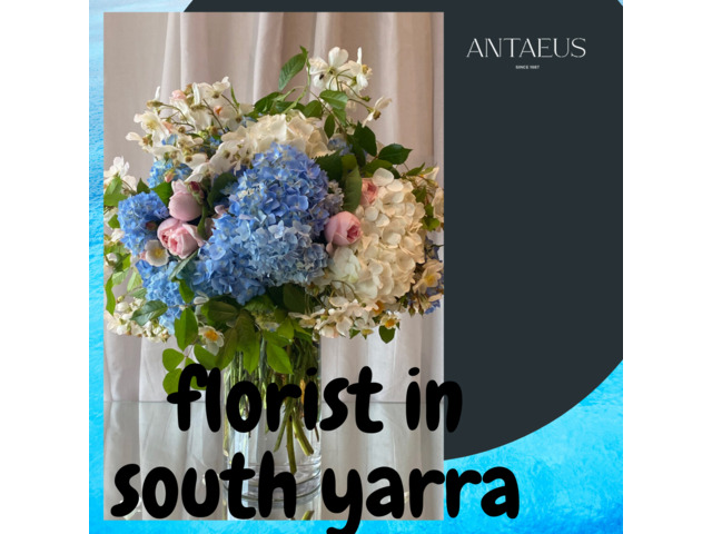 Online Free Delivery Florists  in South Yarra - Antaeus Flowers - 1