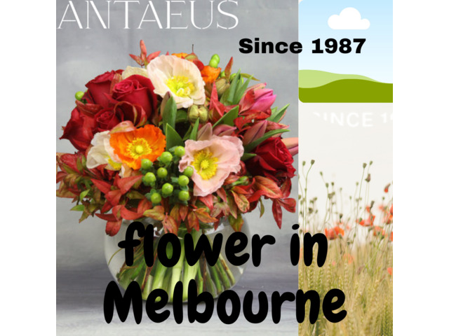 The Best Stop Shop of Flowers in Melbourne - Antaeus Flowers - 1