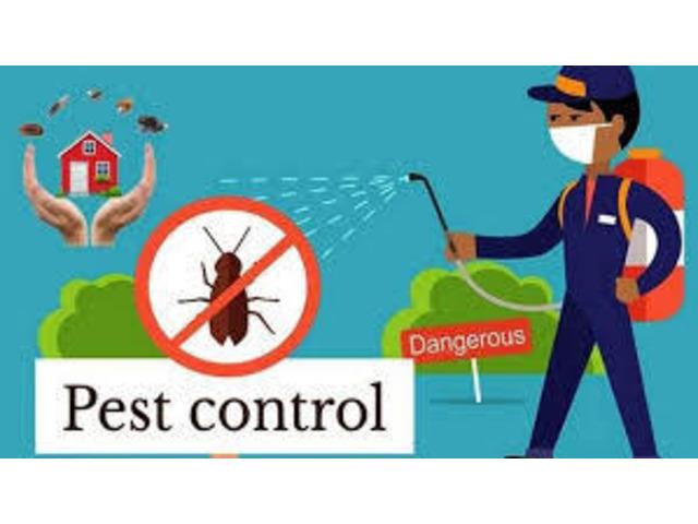 Cockroach Control Sunshine Coast - 1