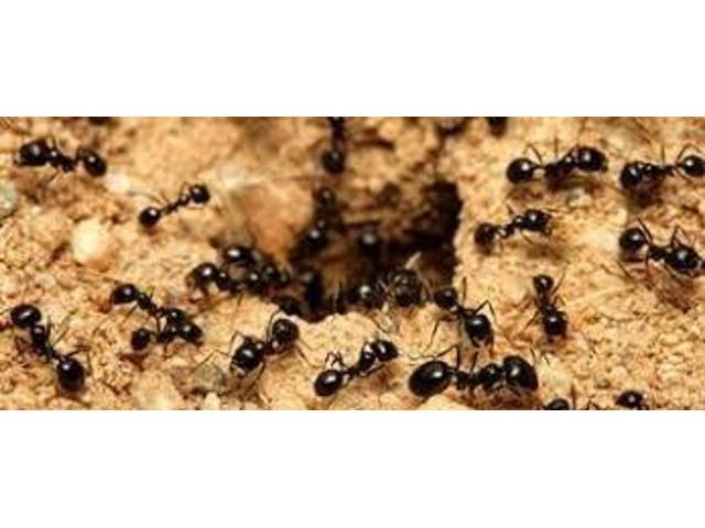 Ant Control Sunshine Coast - 1
