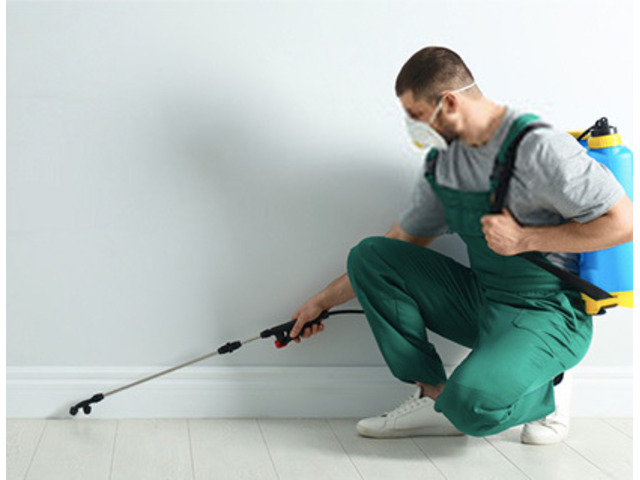 Pest Control In Scoresby | Same Day Pest Control Scoresby - 1