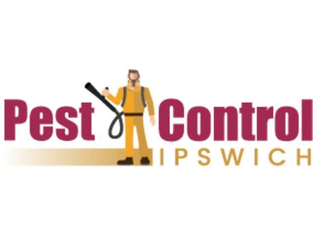 Flies Control Ipswich - 1