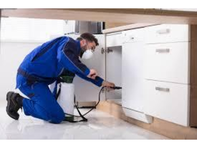 Cockroach Removal Company in Melbourne- Pest Control Doctor - 1