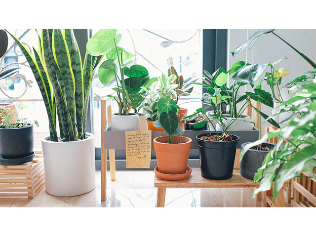 Take a Step Towards Sustainability with Designer Pots in Australia - 1
