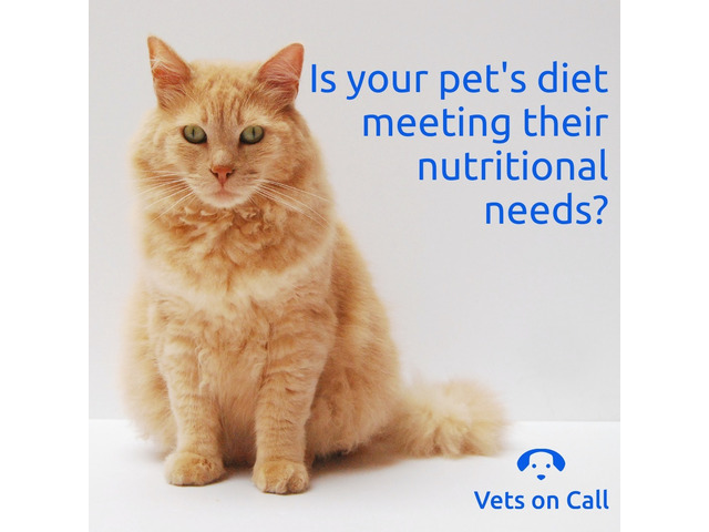 Is your pets diet meeting their nutritional needs? - 1