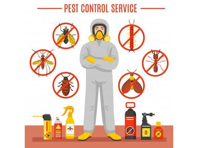 Pest Control Morayfield - 1