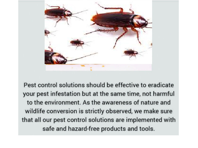 Timely Detection of Pest Possible With Pest Inspection Brisbane Services - 1