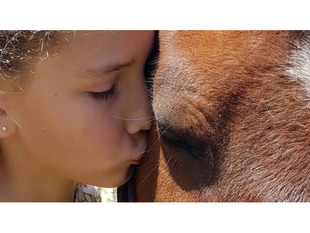 Get Equine Assisted Therapy Online - 1