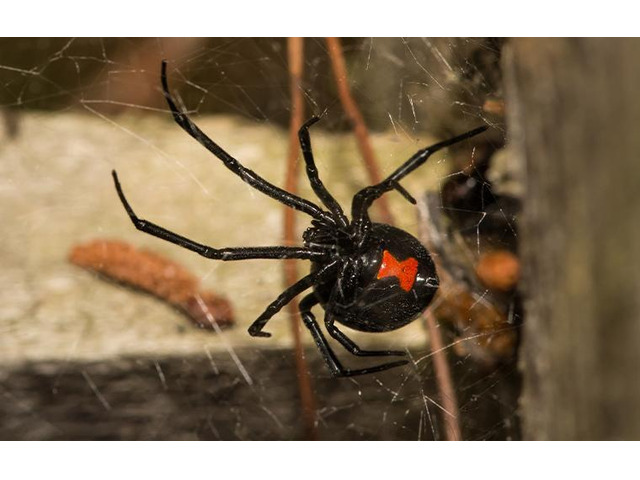 Pest Control Grovedale - 3