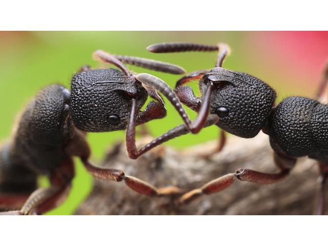 Pest Control Inner West - 1