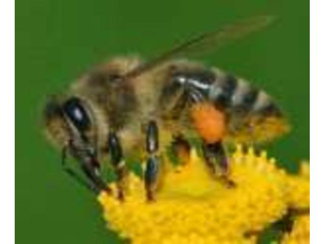 Pest Control Botany - 2