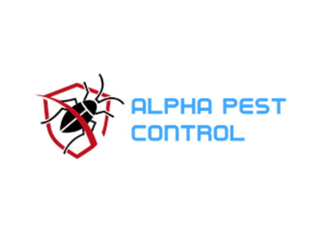 Pest Control In Black Hill - 1