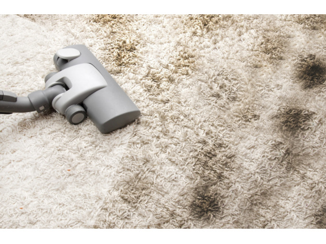 Carpet Pet Stain Removal Services in Hobart At Best Prices - 1