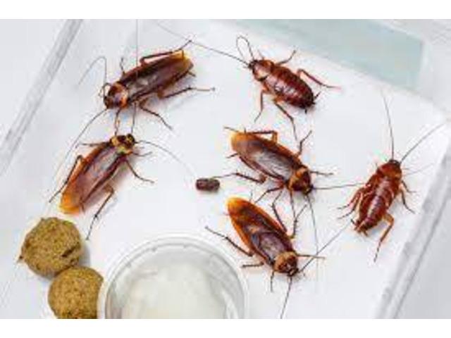 Pest Control Blacktown - 3