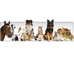 Animal Transport Services