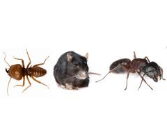 Termite Control Kiama