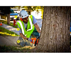 Best Tree Removal Sydney