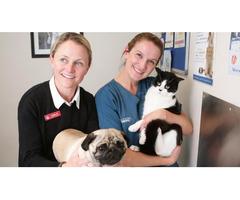 Turramurra Vet - Professional Pet Care Services Offered!