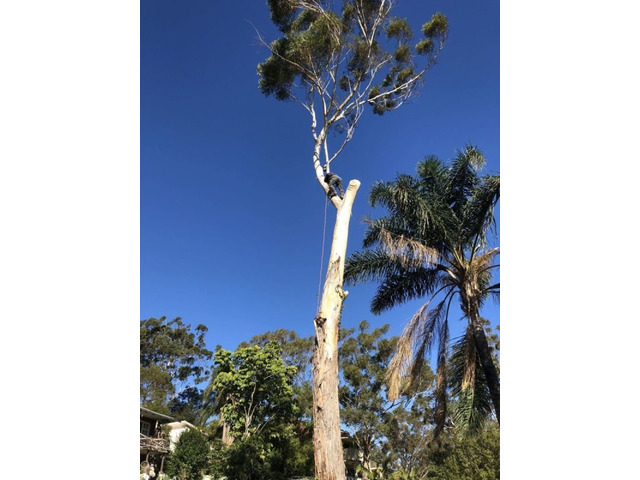 Trip no More with Professional Tree Stump Removal Service - 1