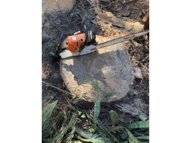 Trip no More with Professional Tree Stump Removal Service - 2