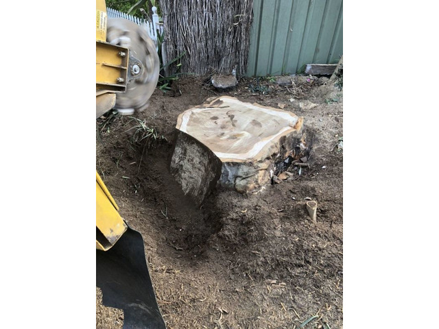 Trip no More with Professional Tree Stump Removal Service - 4