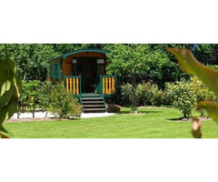 Blossom Lawn with Perfect Gardening Services in Denistone