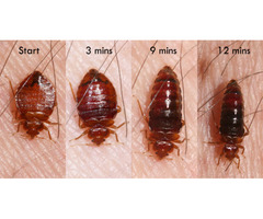Bed Bug Control Services Melbourne - pestmatic.com.au