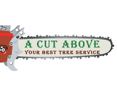 Tree Pruning Services Perth - A Cut Above Tree Service