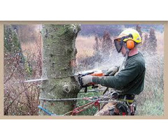 Best Tree Removal Cost In Sydney Northern Beaches & Shores