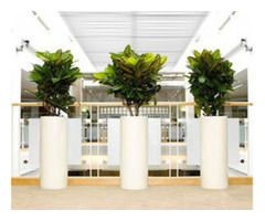 Hire Inscape Indoor Plant for Best Quality Indoor plants in Melbourne