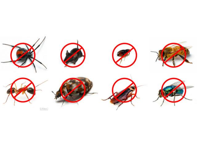 Panther Pest Control Melbourne - 2