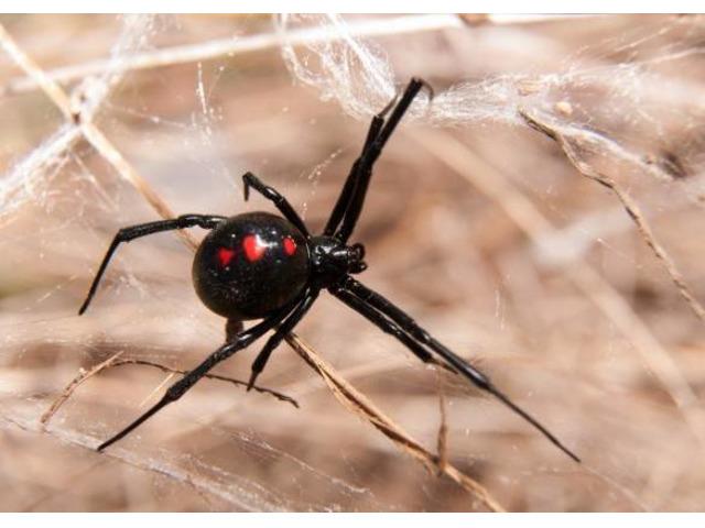 Panther Pest Control Melbourne - 5
