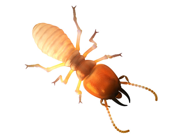 Termite Control Melbourne - 4
