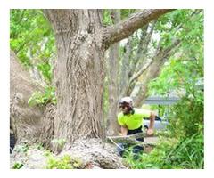 Tree Cutting North Shore