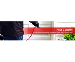 Hire Professional Pest Control Service at Blue Sky Carpet Cleaning