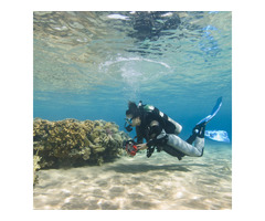 Enjoy Professional Shore Dives in Australia with Let's Go Adventures