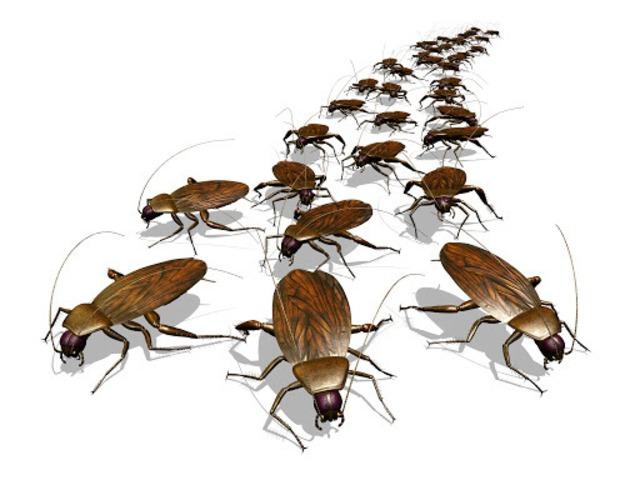 Pest Control Gungahlin - 2