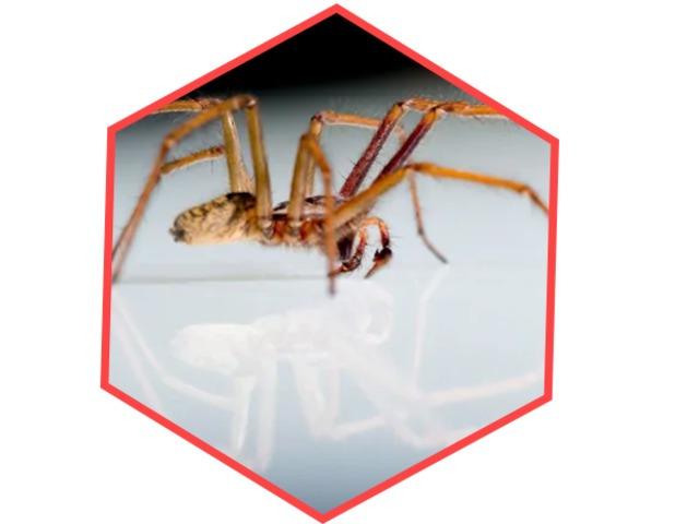 Pest Control Gungahlin - 3
