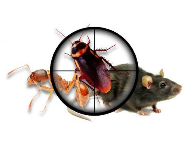 Pest Control Murray Bridge - 2