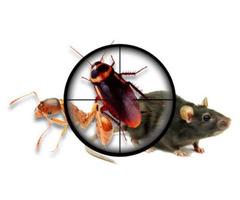 Pest Control Murray Bridge - Image 2