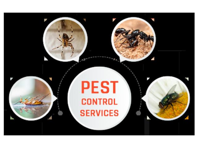 Pest Control Dover Heights - 1
