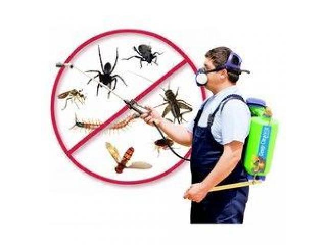 Pest Control Croydon Park - 1