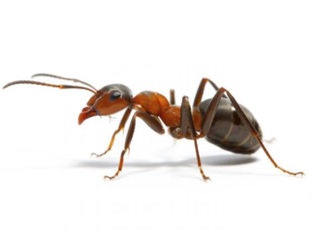 Pest Control Moama - 1