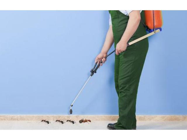 Pest Control Ballarat - 2